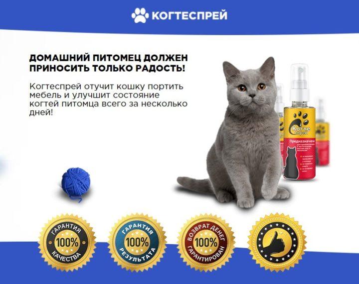 Когтеспрей – уникальный спрей для кошек: купить, цена, обзор, отзыв