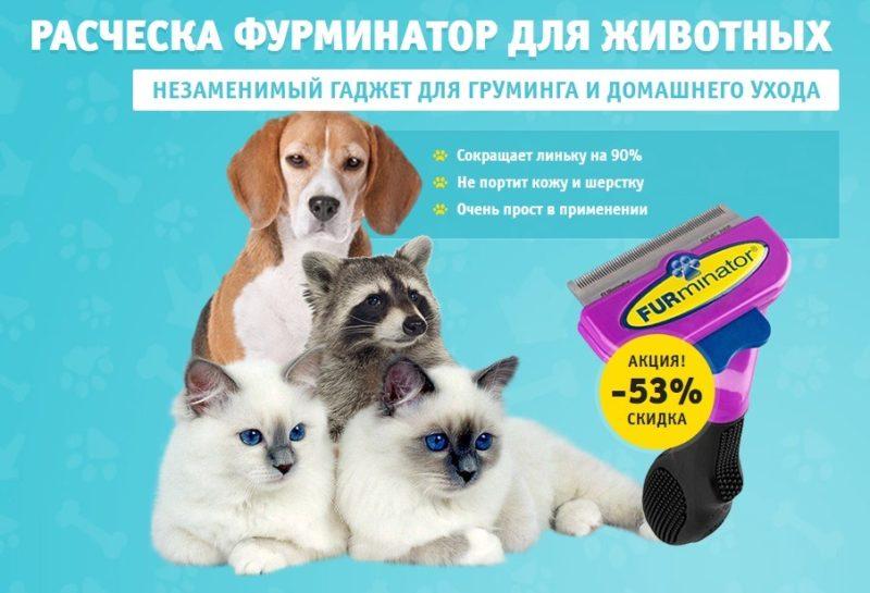 Фурминатор для шерсти животных: обзор и отзывы, купить, стоимость