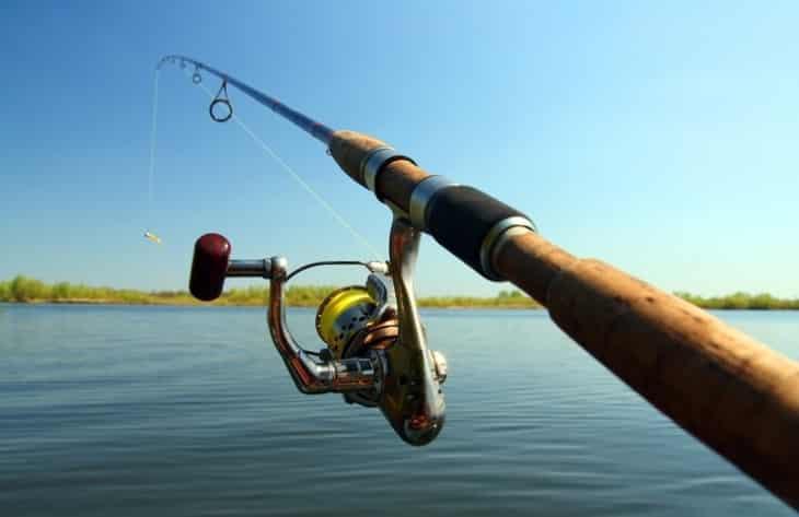 Какую рыбу можно ловить с помощью Shimano Catana