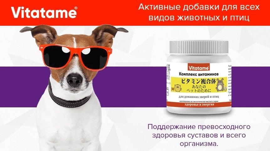 Vitatame - витамины для питомцев: купить, цена, обзор, отзывы