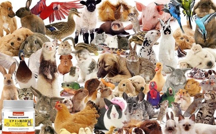 Мой обзор на витамины для животных Vitatame