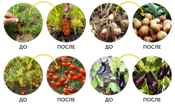 Результаты до и после использования AgroMax