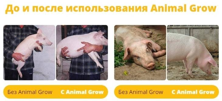 Результаты до и после использования Animal Grow