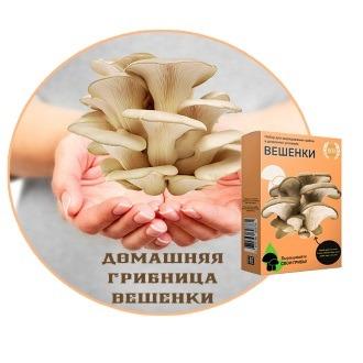 Домашняя грибница вешенки
