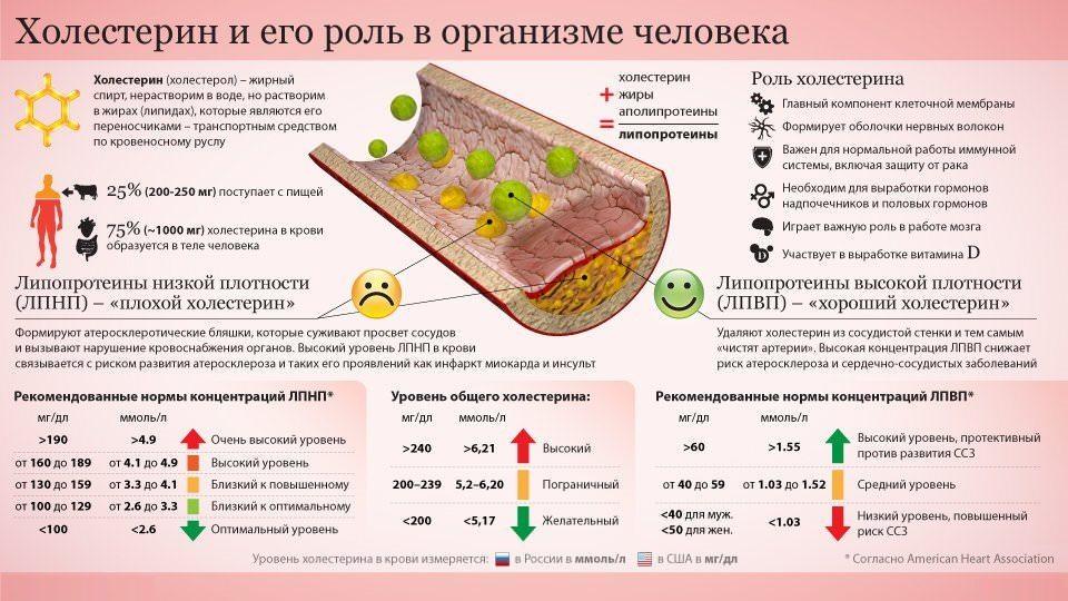 Роль холестерина в организма