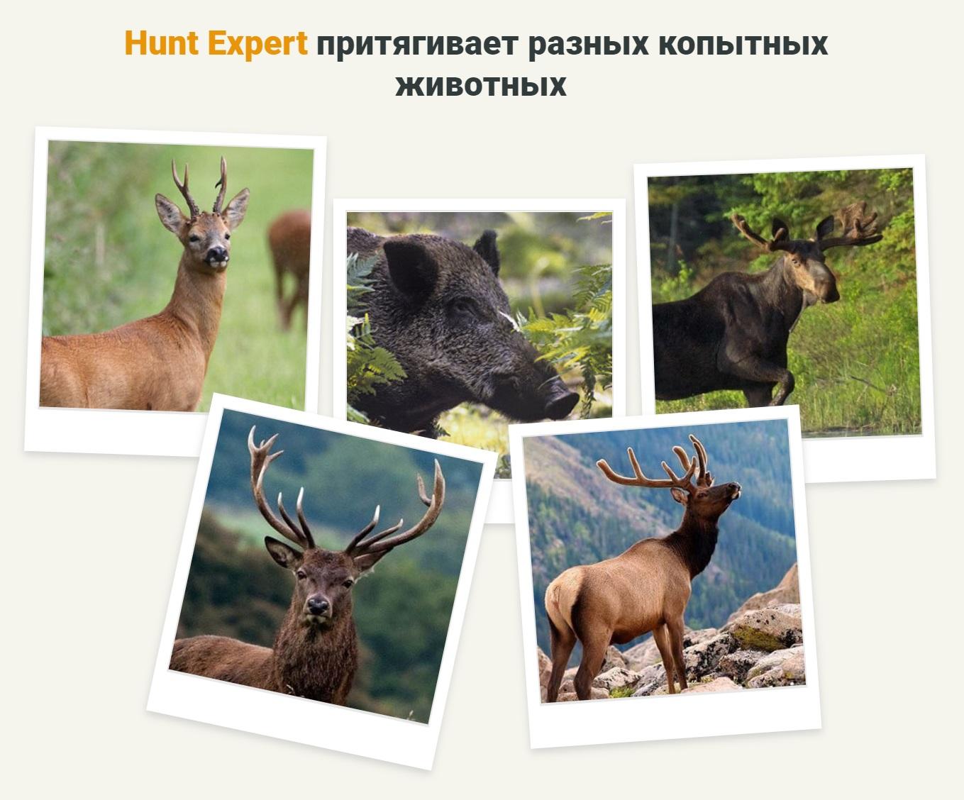 Hunt Expert притягивает разных копытных животных